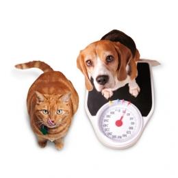 dieetvoeding kat